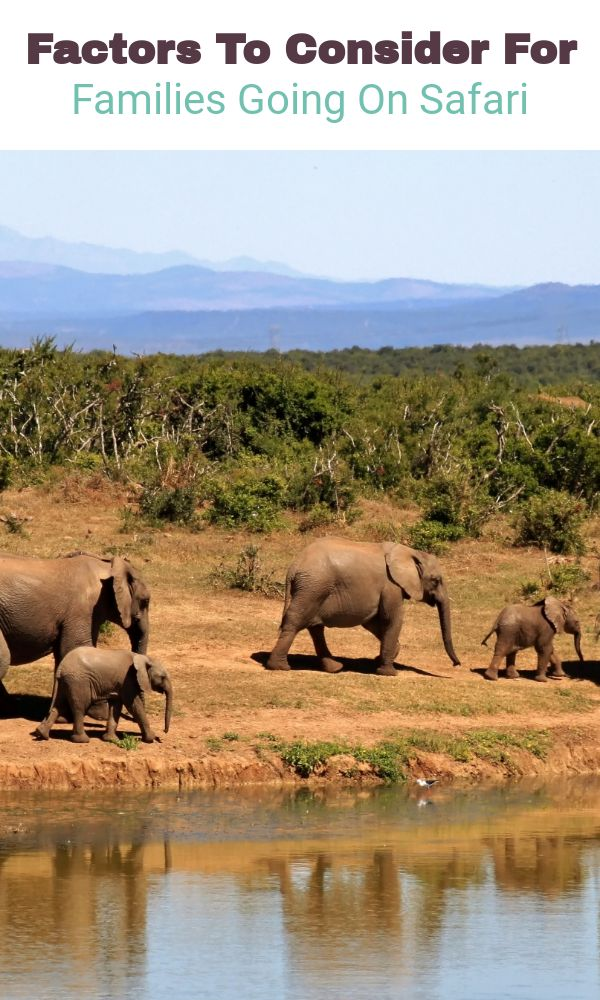 Factors To Consider For Families Going On Safari